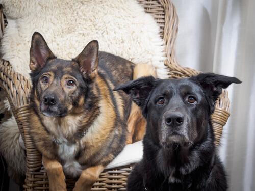 Monta: cosa fare se il cane ne è ossessionato