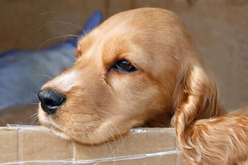 E' pericoloso tagliare i baffi al cane
