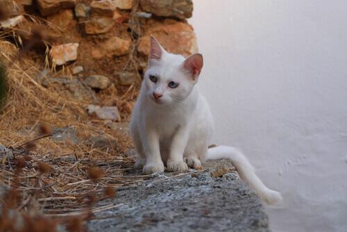 Simbologia del gatto, tra mito e leggenda