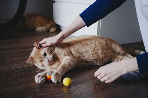Volete aiutare gli altri lavorando con gli animali?
