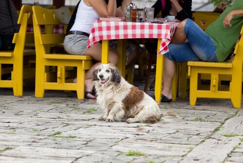 al-ristorante-con-il-cane