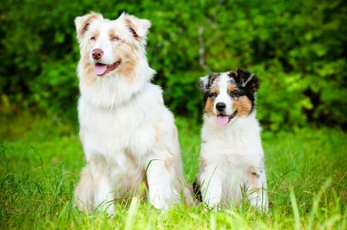 amicizia-tra-cani
