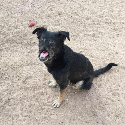 Anubis: il cane che ha percorso 11.000 km per trovare casa