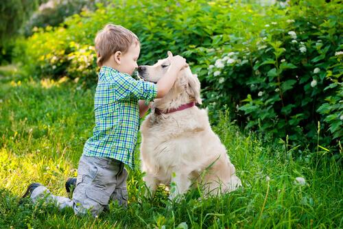 bambino impara linguaggio del corpo cane