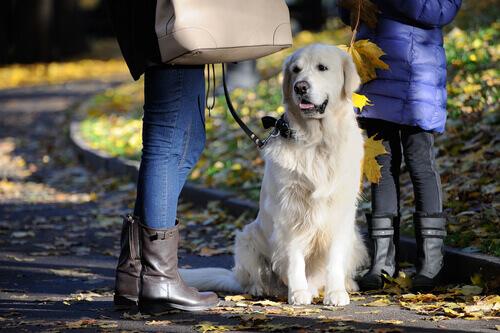 Cane al guinzaglio e donne al parco