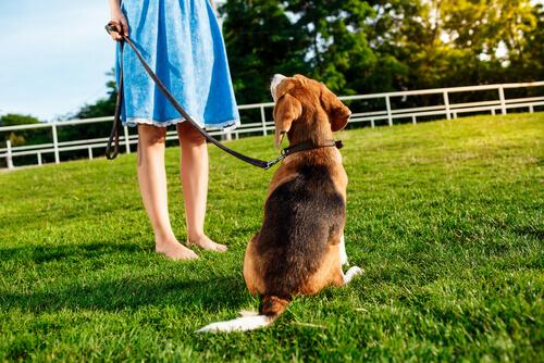 5 suggerimenti affinché il vostro cane vi obbedisca
