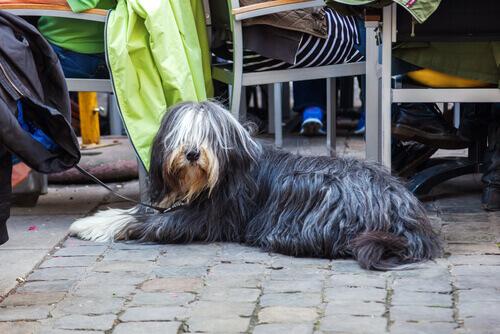 Un ristorante esclusivo: solo per cani