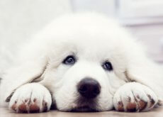 cane vuole essere adottato