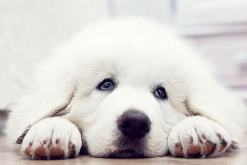 Il cortometraggio su cosa fa un cane per essere adottato