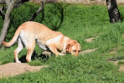 Come insegnare al vostro cane a cercare qualcosa