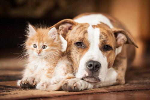 cane-con-gattino