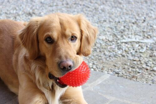 cane-con-palla