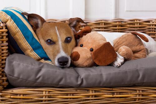 Sapete che anche noi possiamo trasmettere malattie ai nostri animali?