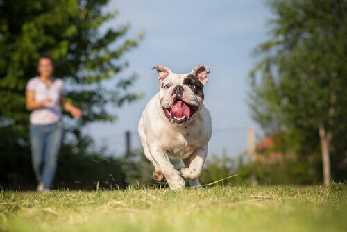 cane-corre-nel-prato