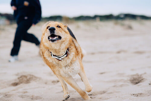 cane che corre con padrone sulla spiaggia