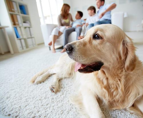 Cane seduto sul tappeto e famiglia sul divano