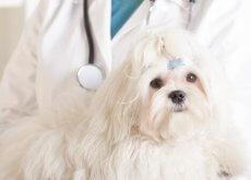 chemioterapia per cani