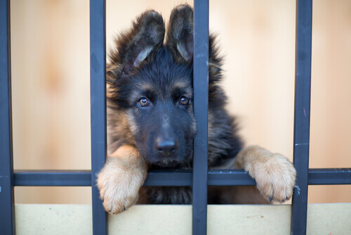 cortometraggio sui cani