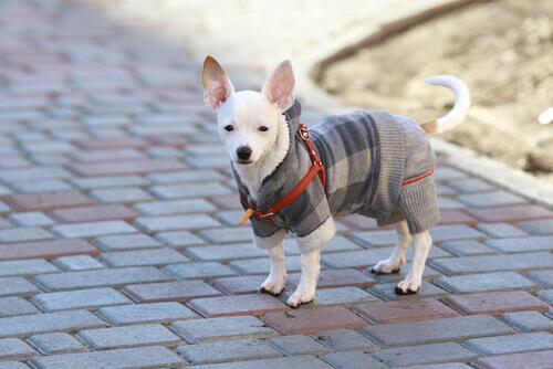 Come prendersi cura del cane in inverno