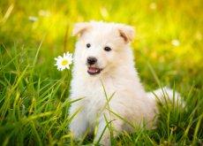 frasi sui cani