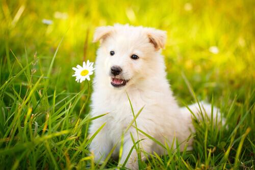 Le migliori frasi sui cani