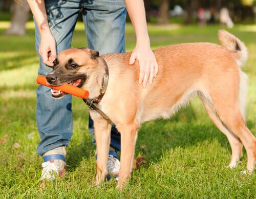 L'attesa delle ricompense è il segreto per spiegare le abilità dei cani