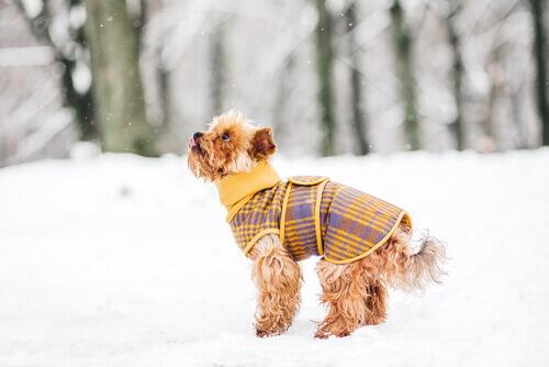 5 trucchi per non far sentire freddo ai cani in inverno