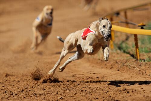 Vietate le corse dei cani in Argentina