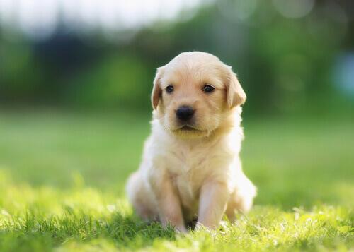 14 nomi creativi per un cane