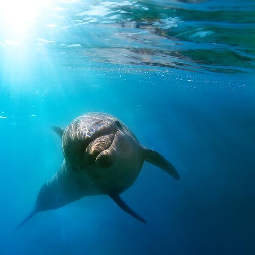 delfino-che-nuota