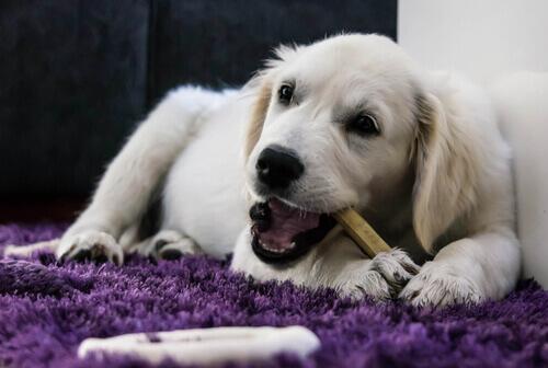 6 componenti essenziali nella dieta del cane