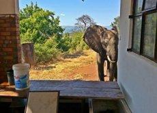 elefante-casa