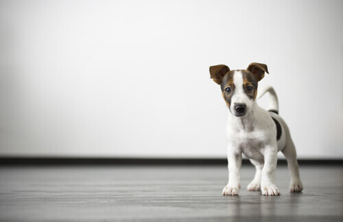 Come risolvere il problema della flatulenza canina
