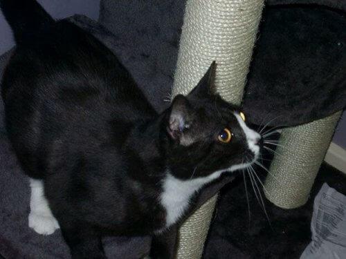 Una gatta scomparsa a Londra ricompare otto anni dopo a Parigi