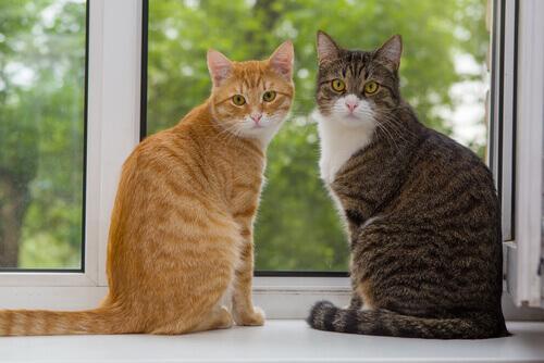 gatti-davanti-la-finestra