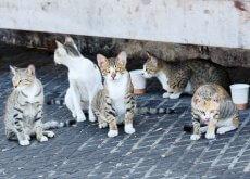 gatti Istanbul