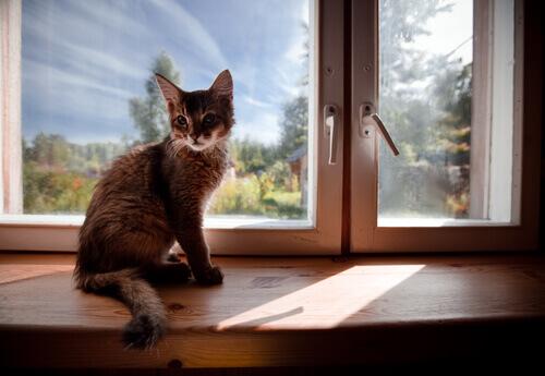 Come rendere la casa più sicura per il nostro gatto?