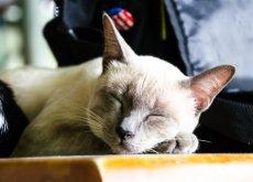gatto anziano dorme