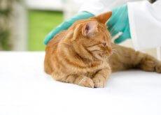 vaccinazioni gatto