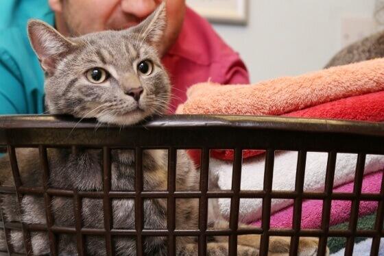 gatto-nella-cesta
