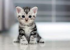 gatto-piccolo-cresce
