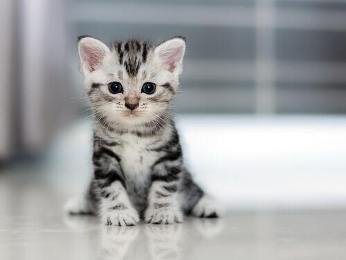 Quanto crescono i gatti?