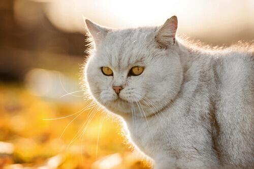 Tutto Quello Che Dovete Sapere Sul Pelo Del Gatto I Miei Animali