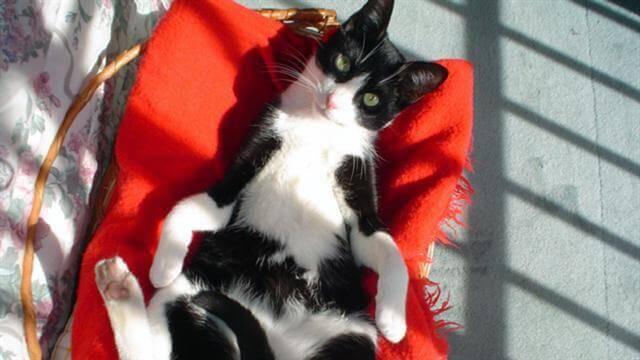 il-gatto-muki-2