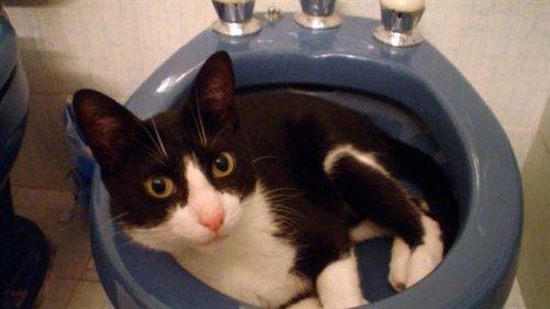 Muki: il gatto che ha usato tutte le sue 7 vite