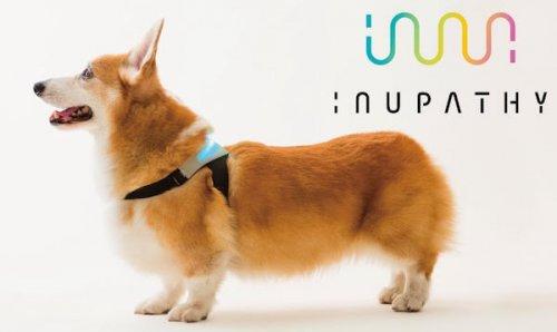 Un collare intelligente per sapere come si sente il vostro cane