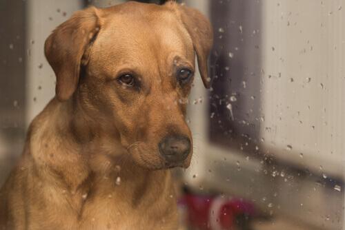In che modo influisce il suono della pioggia sui cani?