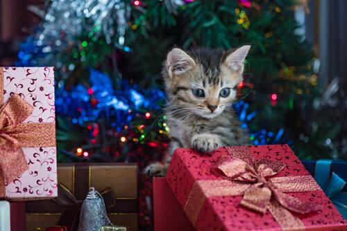 gatto e regali di Natale