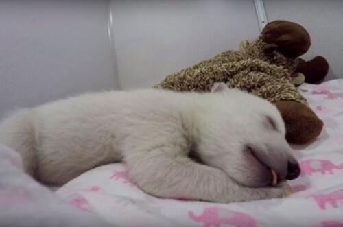 L'orso polare più tenero dei social network
