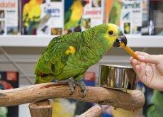 pappagallo-negozio-animali